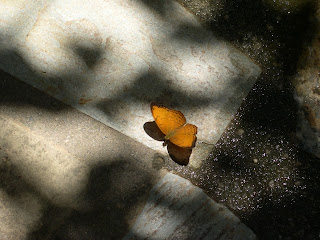 Orange butterfly on a paving stone