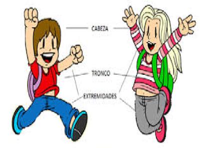 las partes principales del cuerpo humano