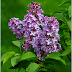 Những loài hoa dại mang màu tím