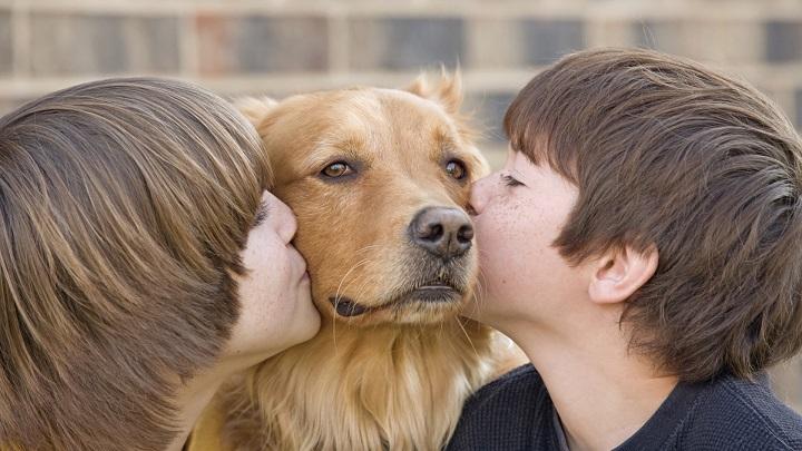 Manten en observación perro adulto
