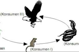 Hubungan Antar Kompenen Ekosistem