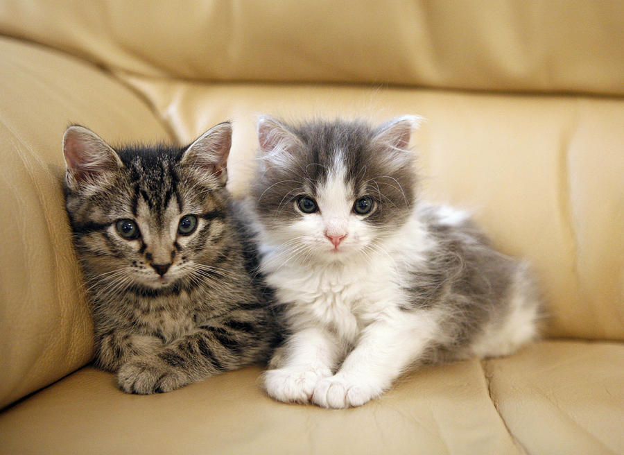 Activating Thoughts: Cute Kittens