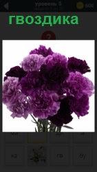 На картинке изображение прекрасного букета розовых гвоздик, приготовленный для вручения по назначению