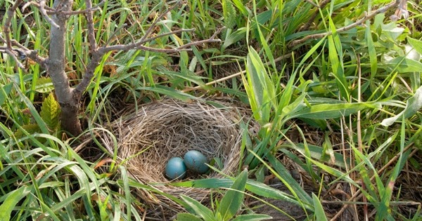 10 Types Of Nests Of Different Bird Species ��� ��� Maya