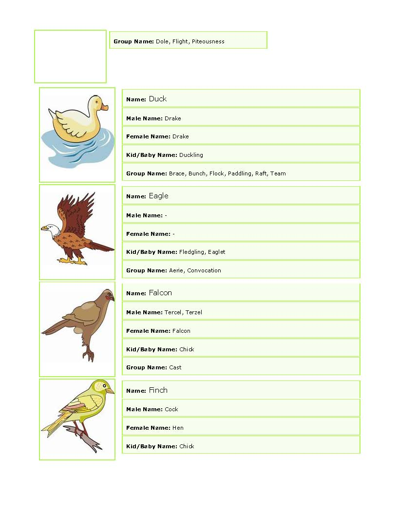 General English for all: World of BIRDs-Picturesque