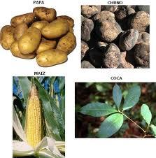 Agricultura Tiahuanaco