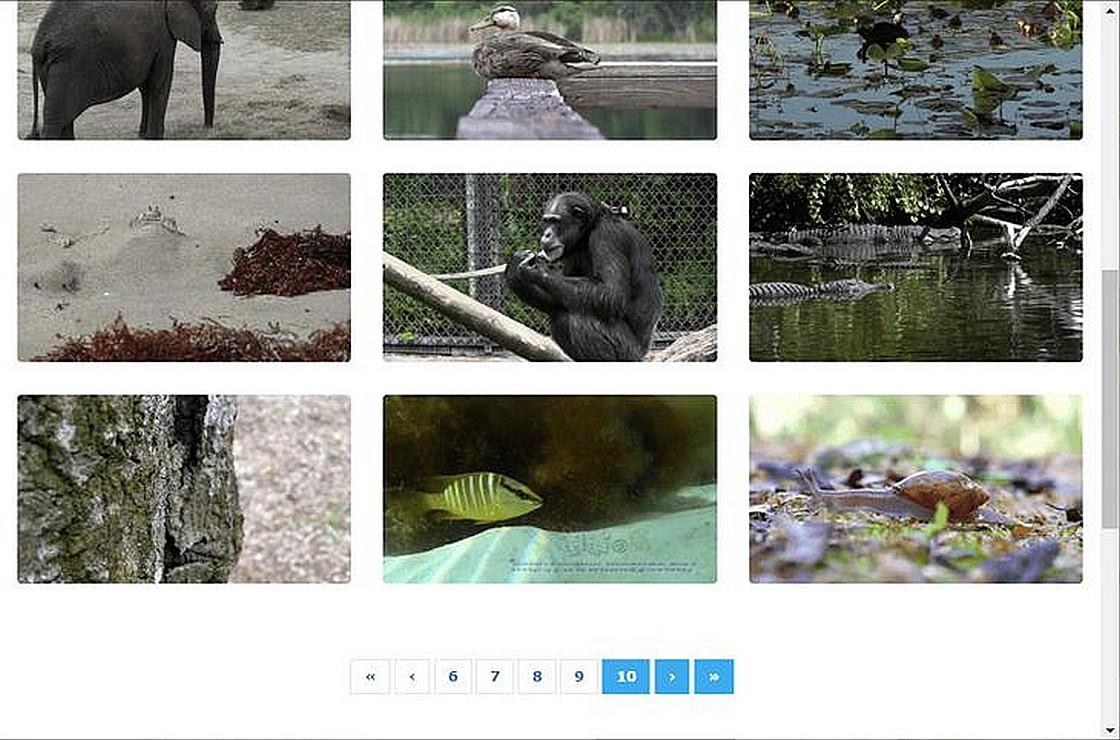 Vidsplay 免費影片素材網站