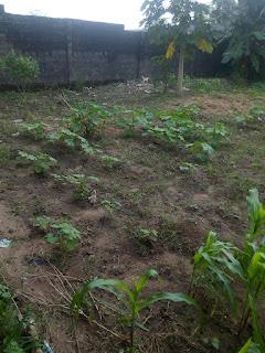 crop improvement farm