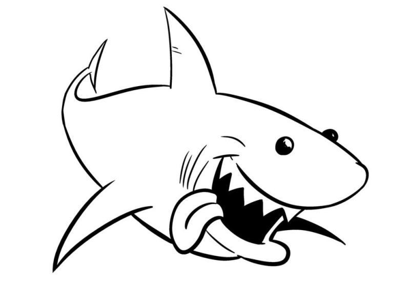410 Koleksi Gambar Ikan Hiu Dengan Pensil Terbaru