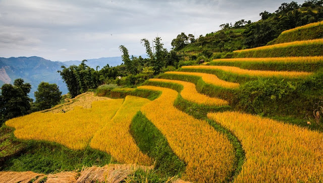 Splendid Golden Season in Hoang Su Phi 2