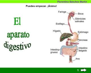 http://cplosangeles.juntaextremadura.net/web/edilim/tercer_ciclo/cmedio/las_funciones_vitales/la_funcion_de_nutricion/digestion/el_aparato_digestivo/el_aparato_digestivo.html