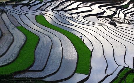 Sau mùa gặt là mùa đổ nước trên ruộng bậc thang Sa Pa