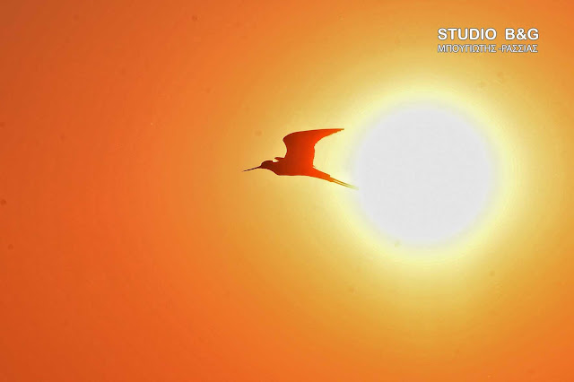 Γ. Καλλιάνος: Τέλος συναγερμού - Που σημειώθηκαν οι υψηλότερες θερμοκρασίες - Υποχωρεί ο καύσωνας
