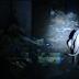Πρωτόγνωρη κατάσταση στο Βασιλικό Πωγωνίου ..Ζούσε στο σπίτι του με 40-50 σκύλους ...[βίντεο]