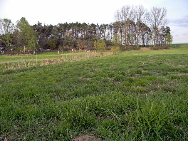trawa, trzcina, drzewa, przyroda