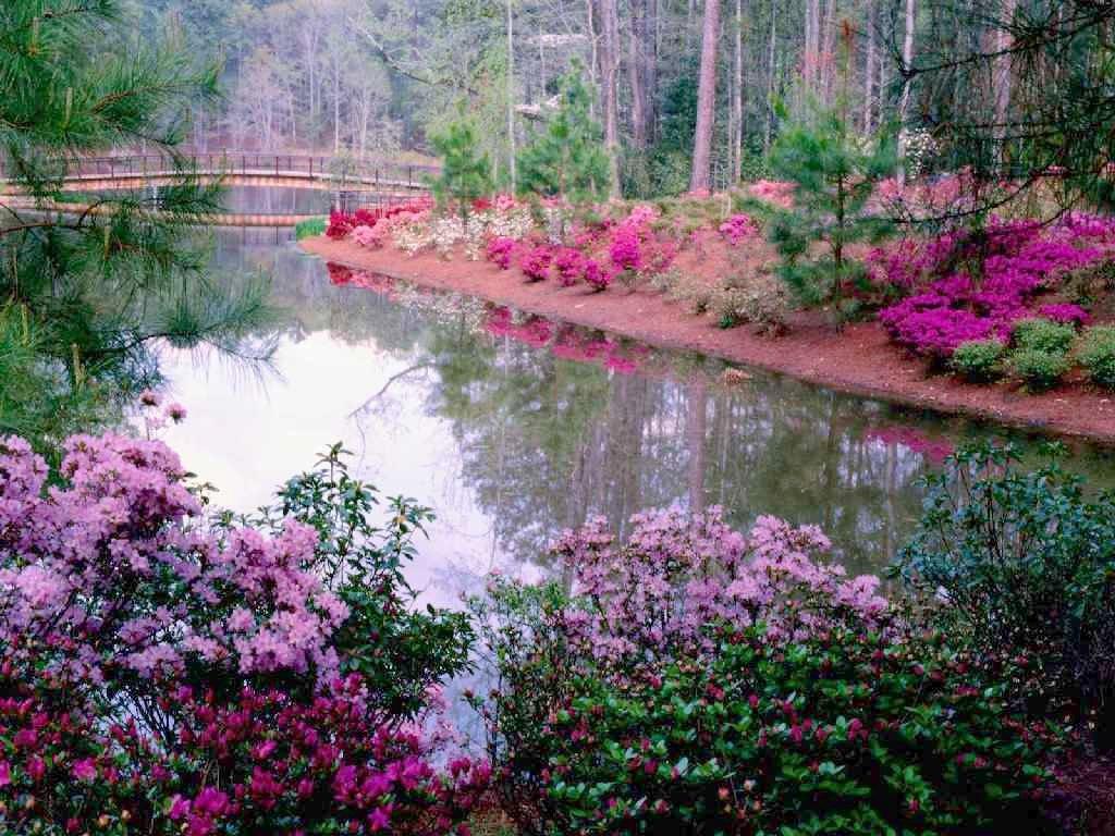 Imagenes De Paisajes De Primavera: Ver Imagenes De Paisajes: Imagenes De Paisajes De Primavera