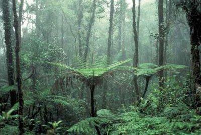 Floresta Decídua Temperada