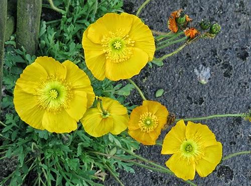 Neuer Gartentraum Page 10 Chan 6097002 Rssing Com