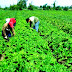 AGRICULTORES SE CONSTITUYEN EN MYPE SANTIAGO DE CHUCO