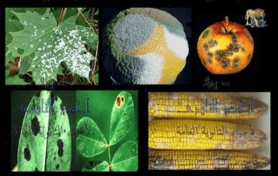 مسببات المرض والموت عند النباتات - الأعداء الخطرة - الفطريات