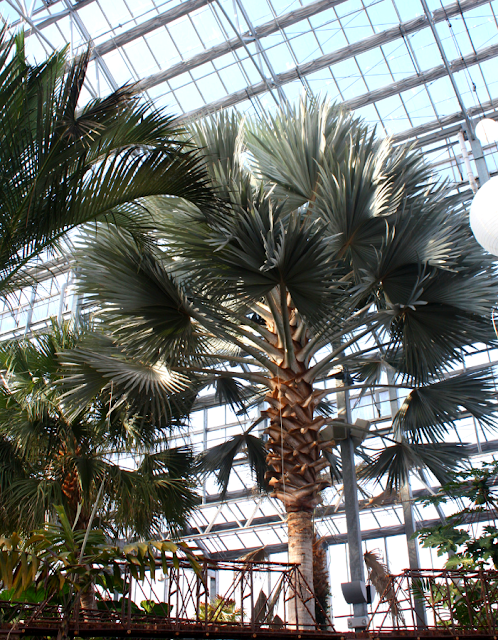 Checking out the palms and enjoying the tropics year round at Nicholas Conservatory in Rockford, Illinois.