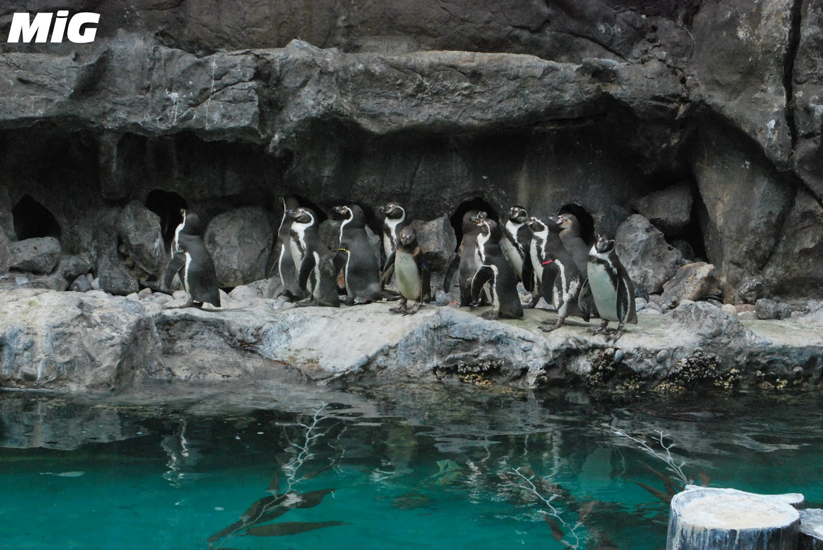 MidwestInfoGuide: Brookfield Zoo
