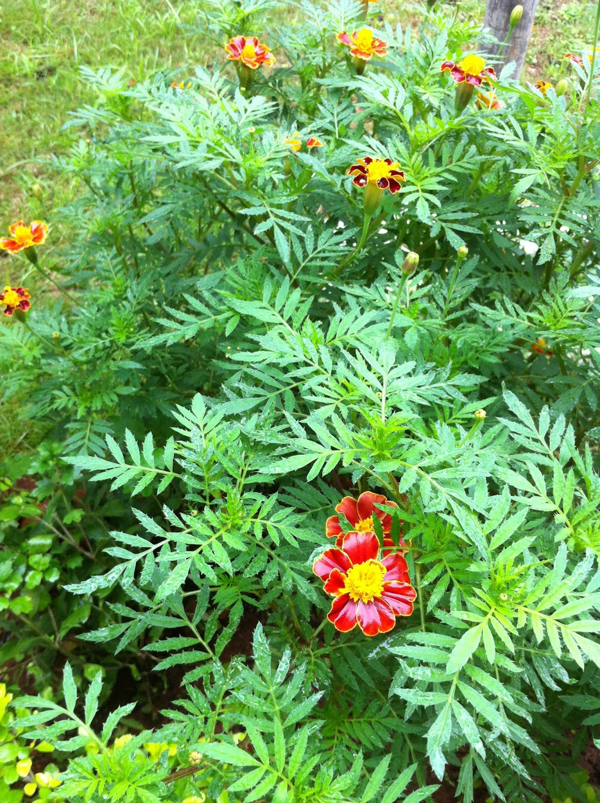 Maha Jeevitham: Morningwalk Nature Collection-1 Home Garden