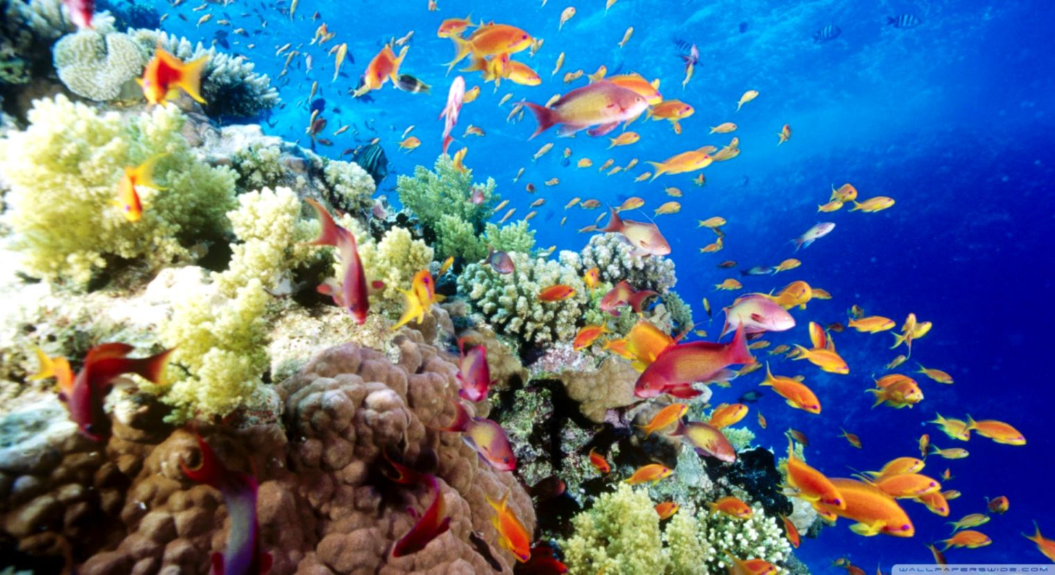 Coral reefs wallpaper lapizarraeducacion - Sea coral wallpaper ...