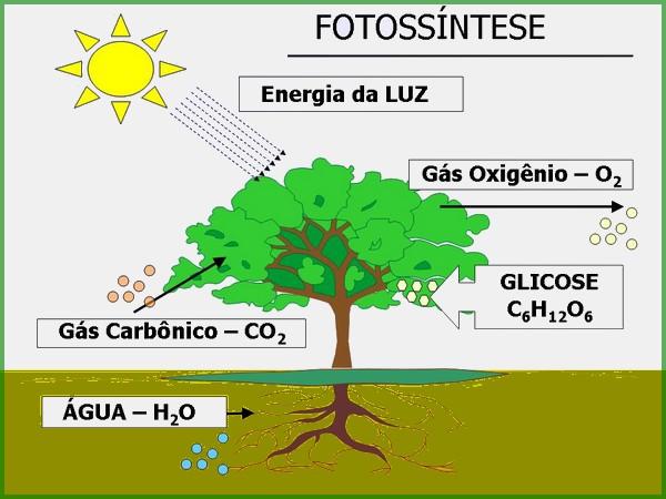 As Folhas Das Plantas Botânica Portal Escola