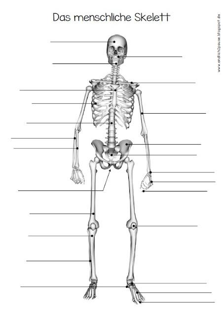 arbeitsblatt vorschule arbeitsblatt skelett kostenlose druckbare arbeitsbl tter f r. Black Bedroom Furniture Sets. Home Design Ideas