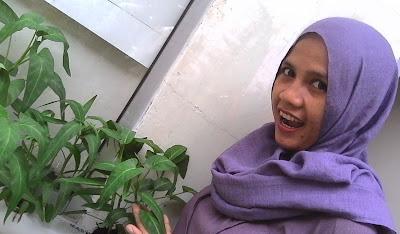 urban farming, urban hidroponik
