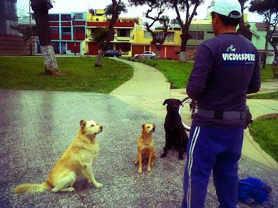 Adiestramiento canino en San Miguel