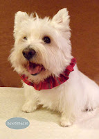 Holiday Homespun Christmas Dog Scrunchie Ruffle