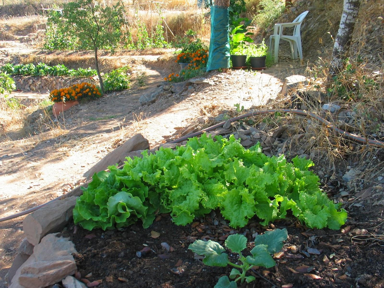 Hestel tellus   compost boerderij portugal: een tuin in de alentejo.