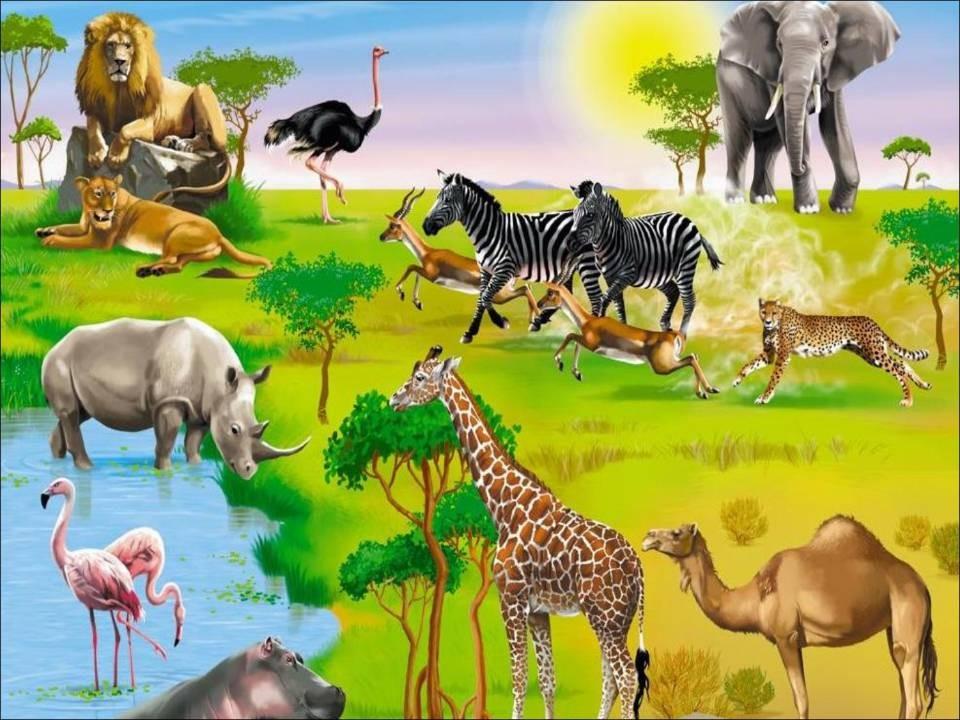 Речецветик Животные жарких стран