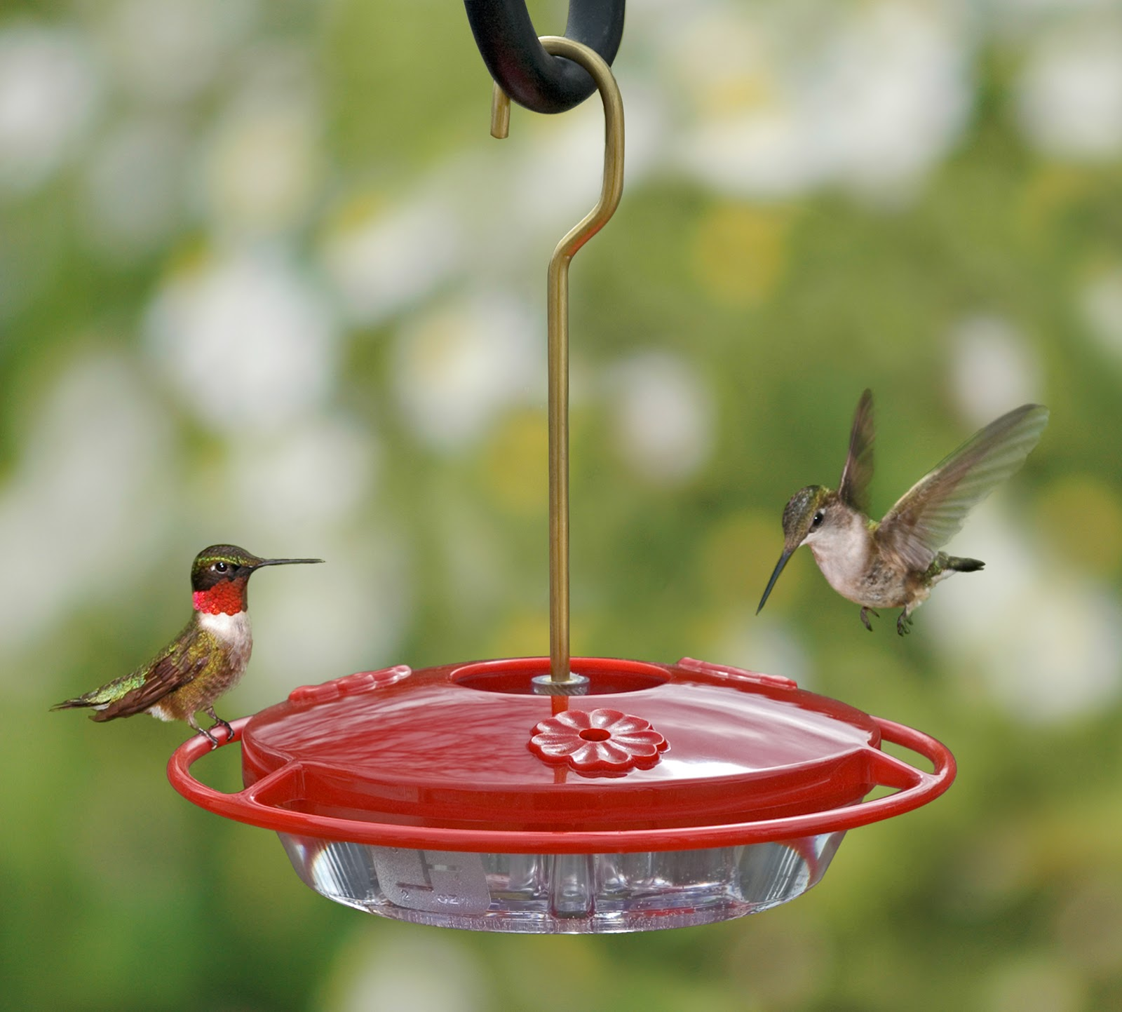 dr yard alabama trussville hummingbird to and sargent study have my master bird hummer bander red be of i the hanging said best in feeder bob president jbs group your feeders inc now