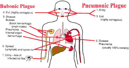metformin blood pressure