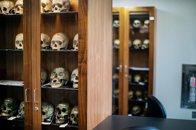 A new take on the 19th-century skull collection of Samuel Morton