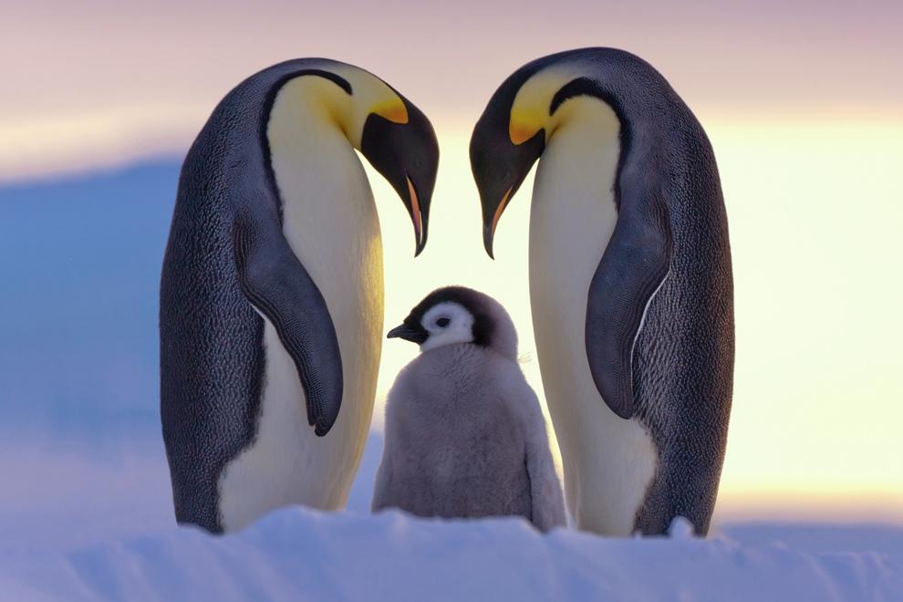 البطريق الإمبراطور
