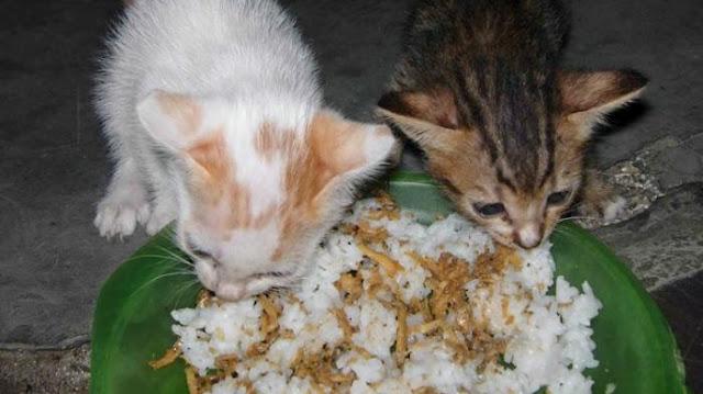 ROSULULLAH BERKATA : Jangan Usir Kucing yang Mendekati Kamu Saat Makan, Ini Penjelasannya..!!!