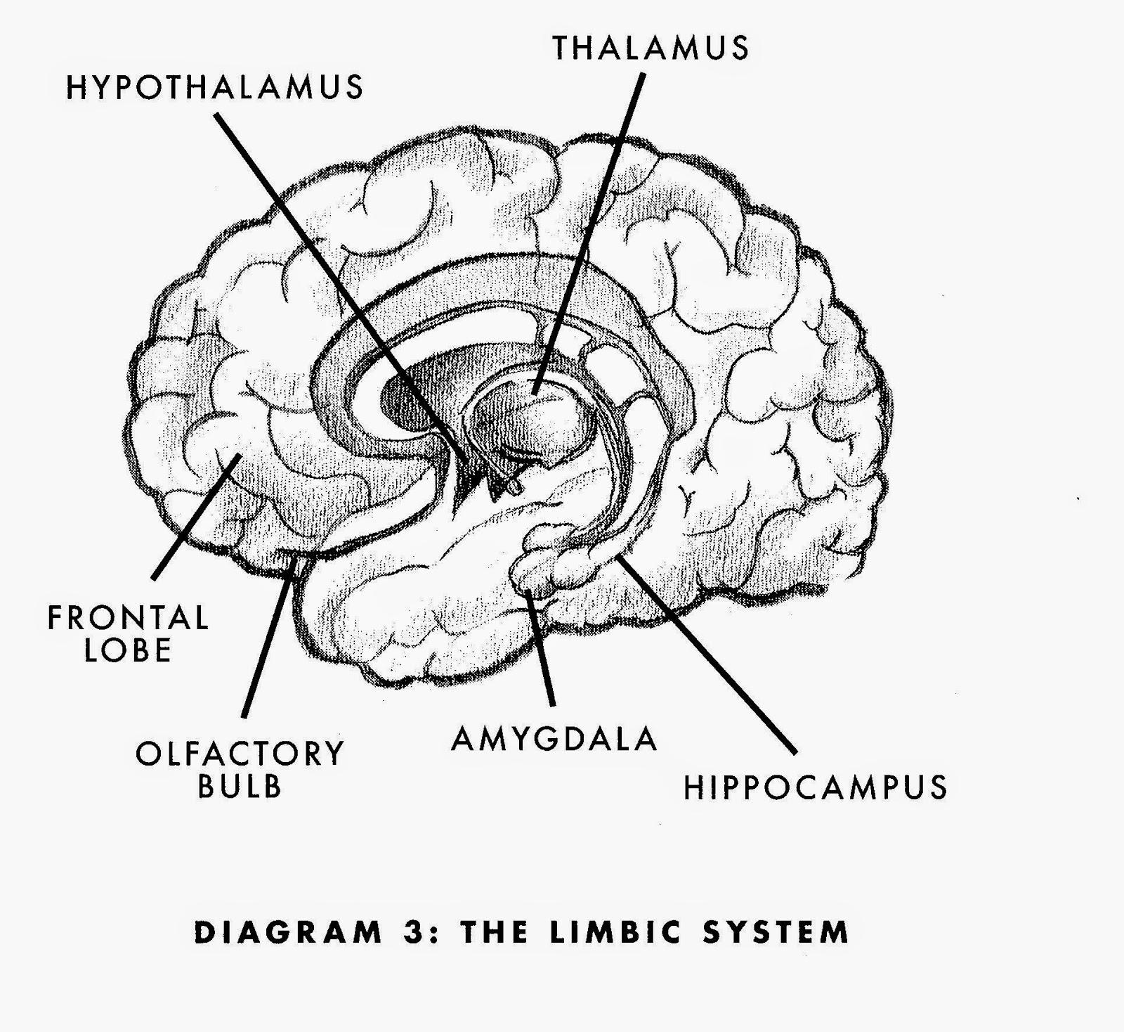 Super Brain By Rudolph E Tanzi And Deepak Chopra