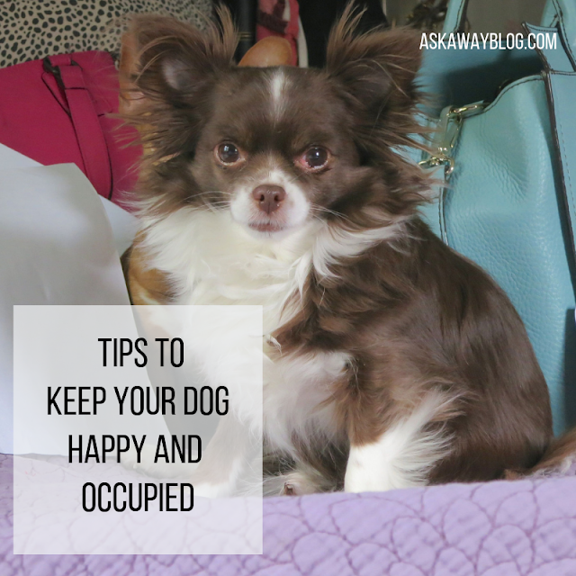 Tips to Keep Your Dog Happy and Occupied
