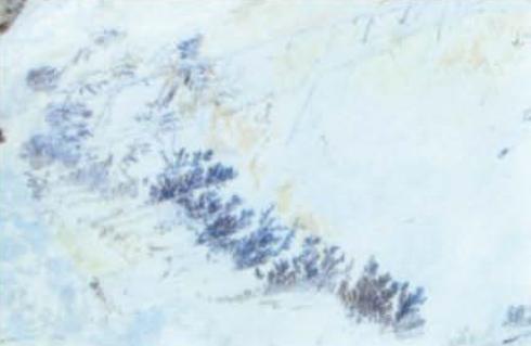 Ultimaorma la pietra alberese for Alberelli ornamentali