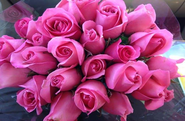 Mawar pink tua pertanda rasa terima kasih