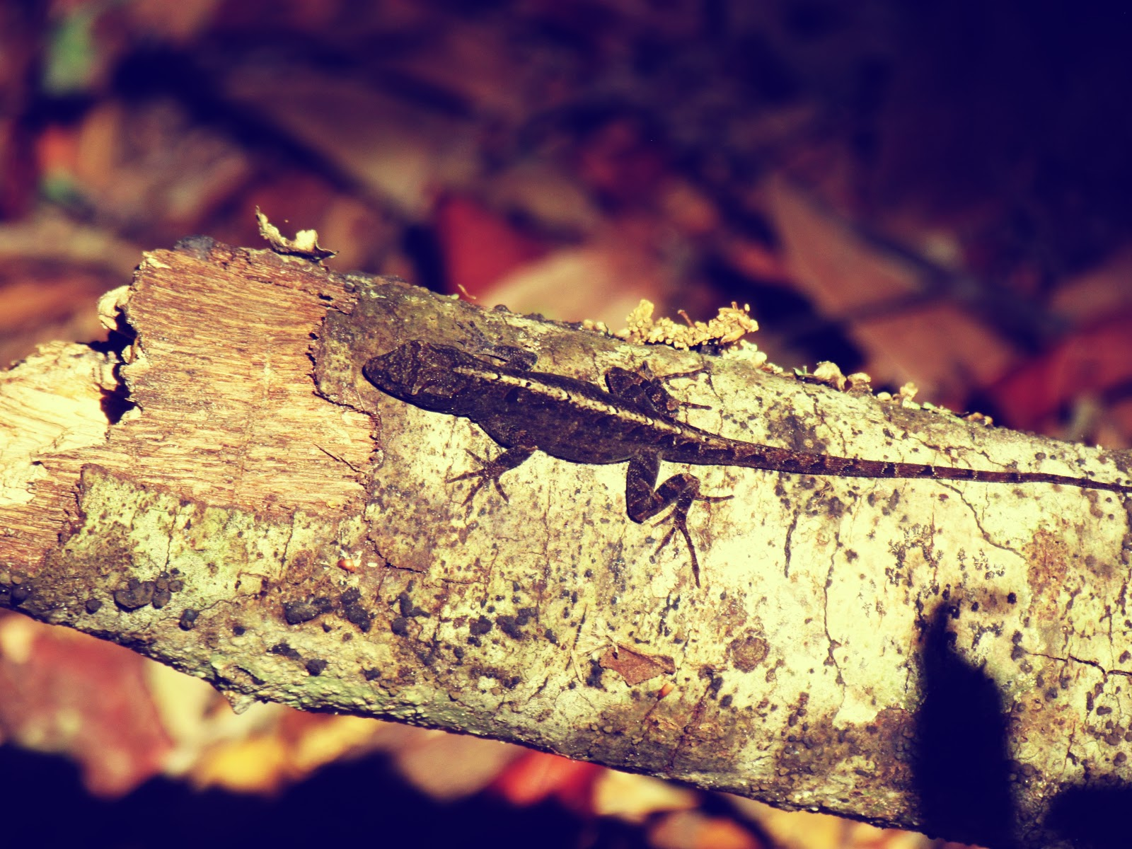A Lizard on a Tree Branch on an Unseasonably Warm Autumn Day in October