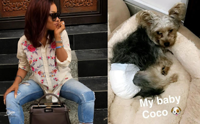 Image result for Toke Makinwa's dog