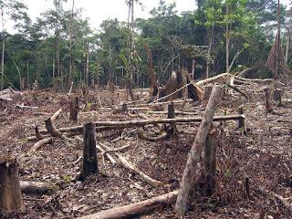 Pengrusakan hutan
