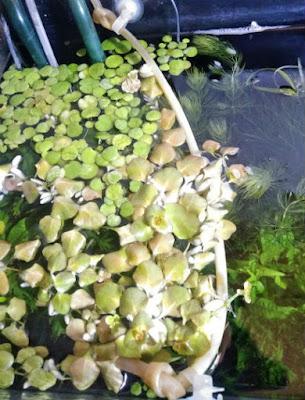 エアチューブで作った堤防と浮草