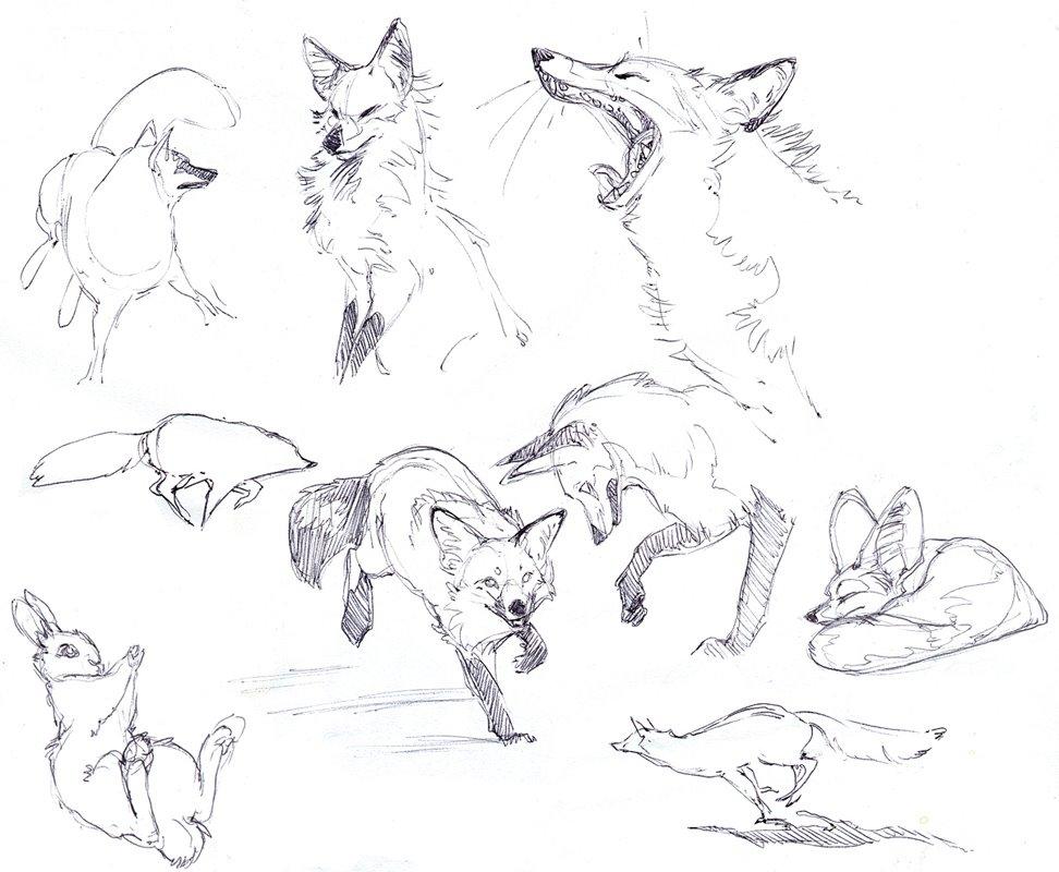 Let's Draw Endangered Species! : ): Lissa Treiman