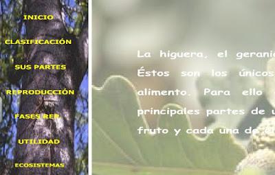 http://www.ceiploreto.es/sugerencias/juntadeandalucia/la_tierra/plantas/indexplantas.html